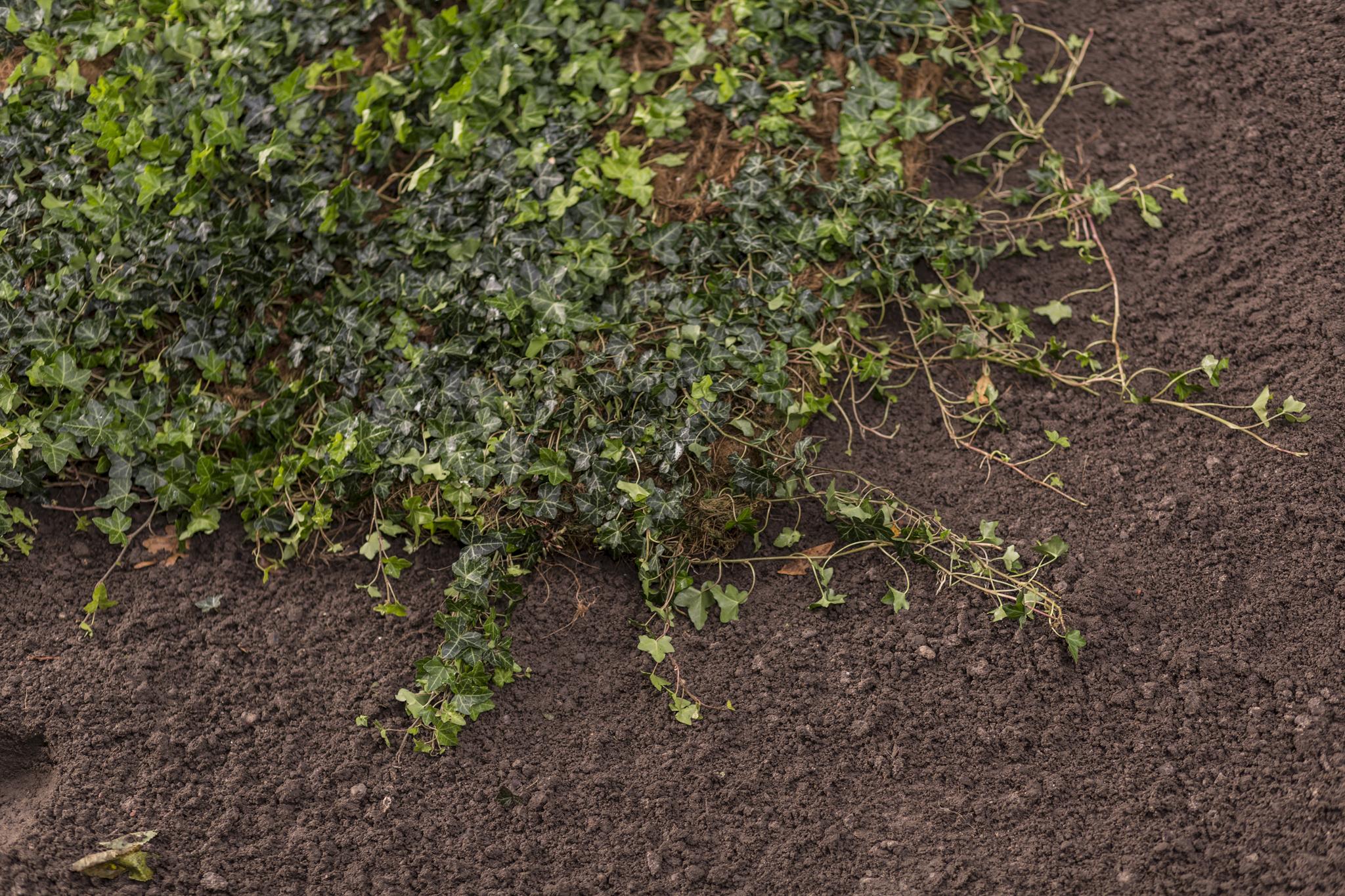 Balm Standardmatte Helix Pflanzen
