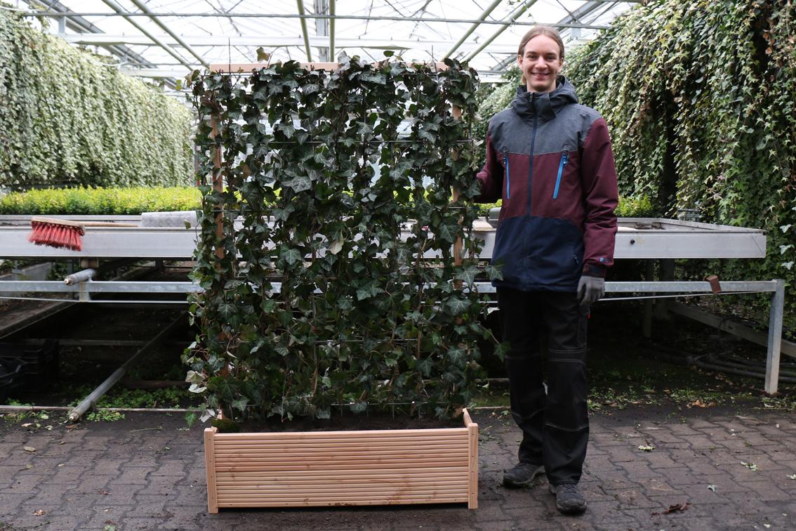 Hecke Am Laufenden Meter Balkon Mit Gefass Bausatz Helix Pflanzen