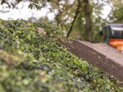 Bodendecker am laufenden Meter® Einbau