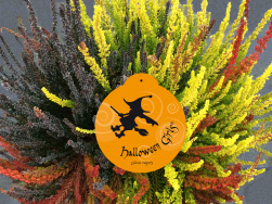 Calluna Halloweengirls®