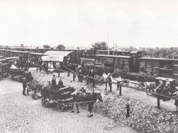 Moorbeetpflanzen in Leipzig 1925