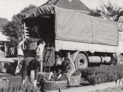Moorbeetpflanzen in Leipzig 1969