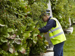 Regelmäßige Kontrolle und Pflege der Pflanzen