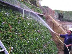Helix® Repens - Wässern