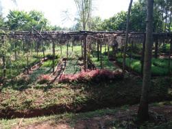 Baumschule im Maasai-Dorf Olereko, Kenia