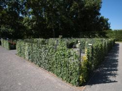 Efeu-Labyrinth Kloster Roggenburg