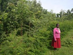 Baumbepflanzung als Wiederaufforstungsmaßnahme in Olereko, Kenia
